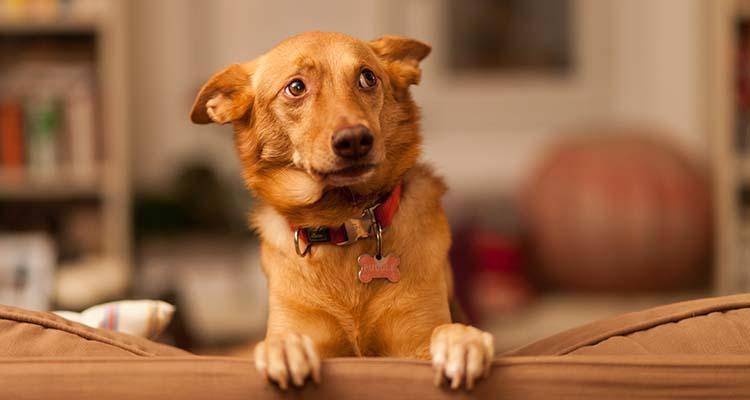 dog tripping alarm