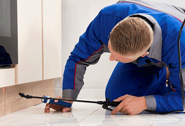 Pest Inspection/Treatment